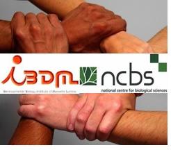 IBDM NCBS